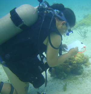 Albany Coral Reef Assessment